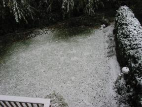 Click to enlarge: Snow-frosted lawn
